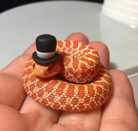 Вы все еще боитесь змей? Тог…