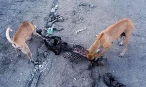 Под Киевом собаки загрызли с…