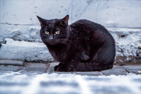 Старуха ударила кота, я на н…