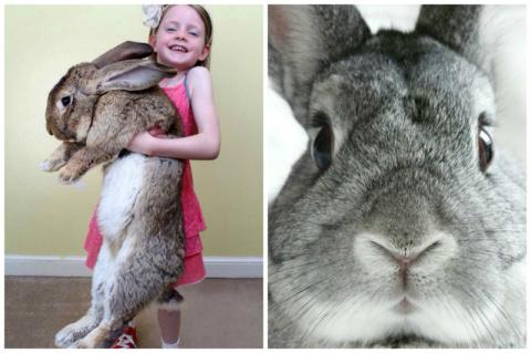 Кролики - это не только ценный мех. Невероятные факты о кроликах