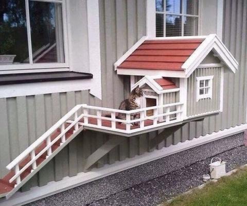 Кошкин дом! Хозяин - гений!