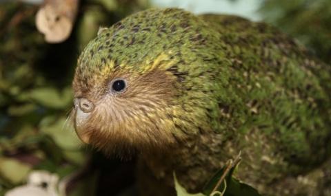Редкий вымирающий вид птиц только что получил шанс на выживание