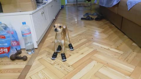 Собаки в ботах и кот боксёр