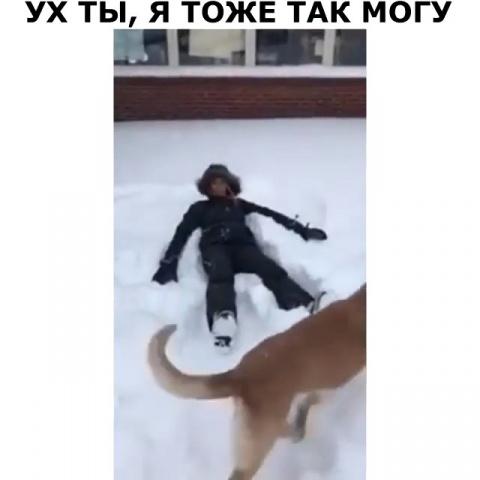 Собачка молодец))