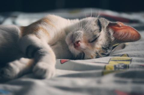 Время ночного пробуждения говорит о вашем эмоциональном состоянии и здоровье