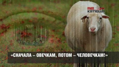 «Сначала – овечкам, потом – …