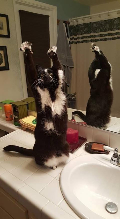 Коты, которые наотрез отказы…