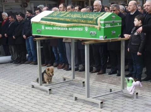 Осиротевший пес каждый день приходит на могилу хозяина