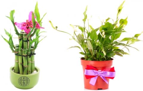 Комнатные растения, приносящие счастье