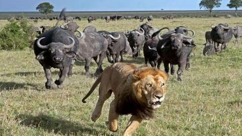 В мире животных по-дагестански