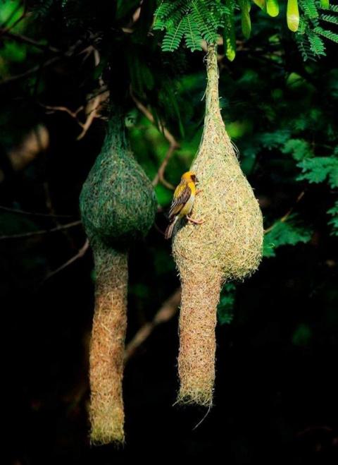 Удивительные гнезда птиц