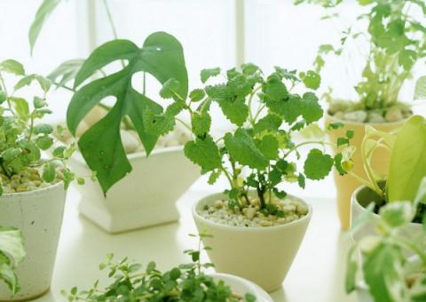 10 законов выращивания комна…