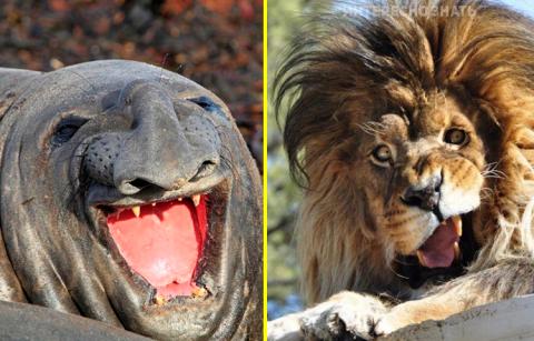 25 уморительно нефотогеничных животных, которые рассмешат вас до слез