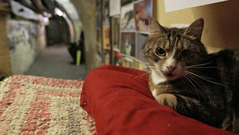 В Эрмитаже из-за задымления погибли несколько музейных кошек
