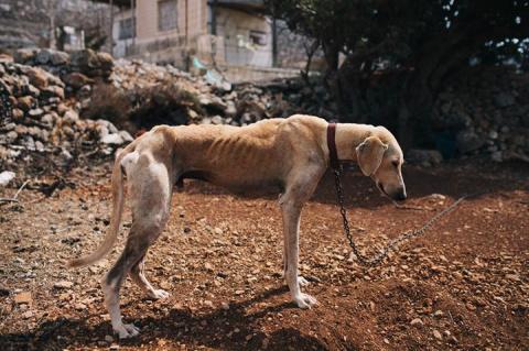 Этот пес был близок к смерти…