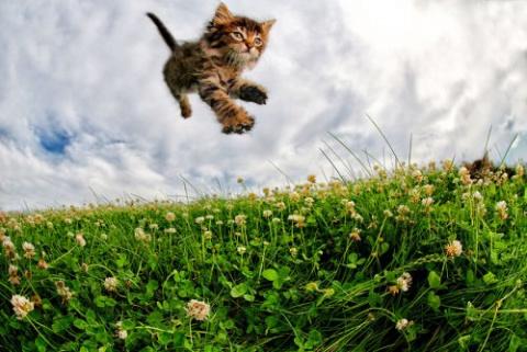 Прикольные котята в фотографиях Сета Кастила