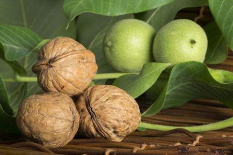 Выращиваем грецкий орех правильно