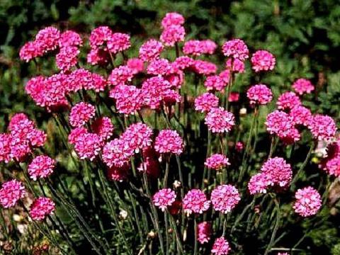 Растения, которые почти не нуждаются в поливе