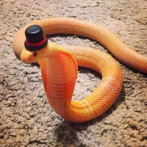 Эти змеи в шляпах просто восхитительны!