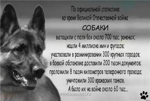 Собаки в Великой Отечественной войне. Почему хозяева так сильно любят своих собак