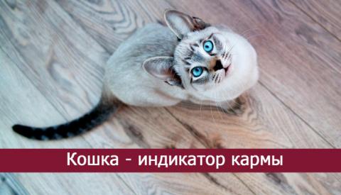 Кошка — индикатор кармы!