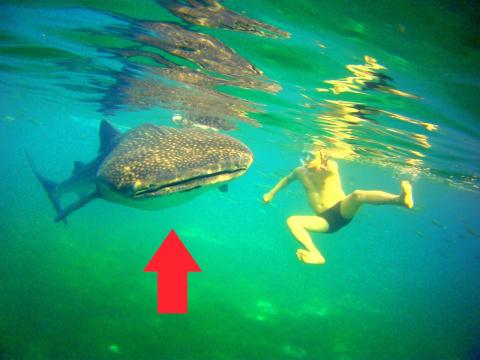 Встреча с Гигантскими Китовы…