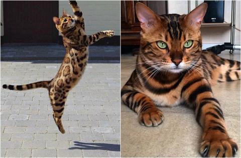 Мини-леопард: 10 удивительны…
