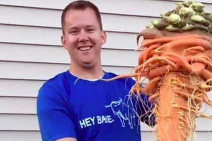 Огромная морковь огородника …