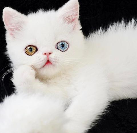 Котёнок с необыкновенными гл…