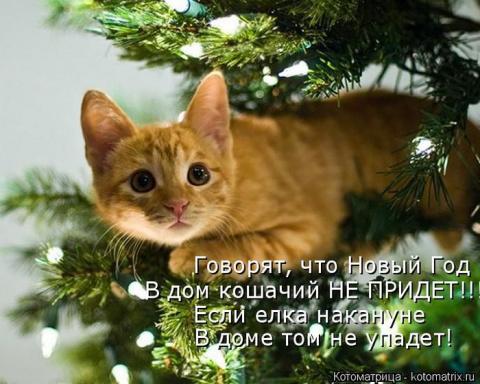 Веселые котоматрицы на выход…