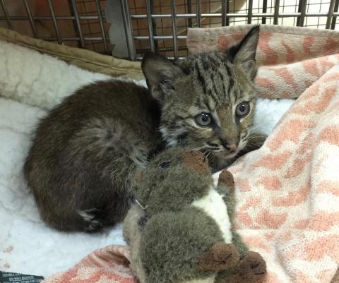 Беспризорный «котенок», спас…