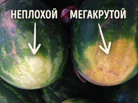 Как правильно выбирать арбуз…