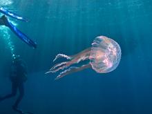 Подводная Италия: куда отпра…