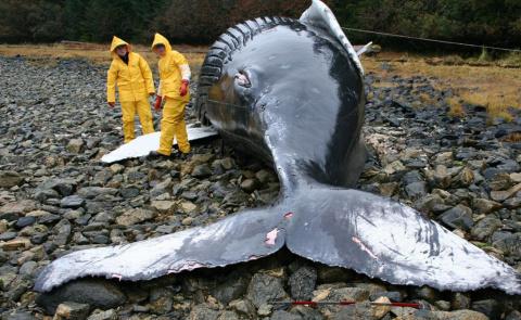 Почему киты и дельфины выбра…