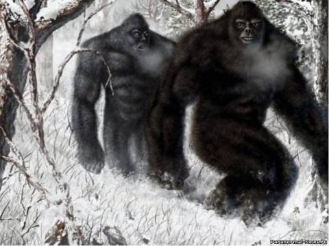 Десять теорий о Снежном Человеке