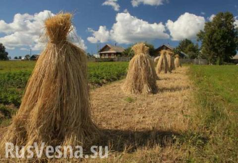 Экспорт украинской соломы в …