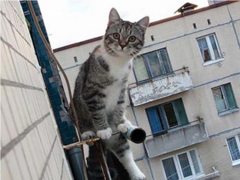 Спасая кота, мальчик упал с …