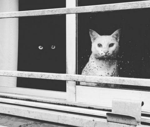 Как инь и ян: черные и белые котики