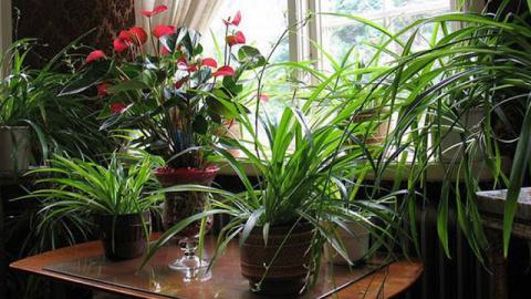 6 комнатных растений, которы…