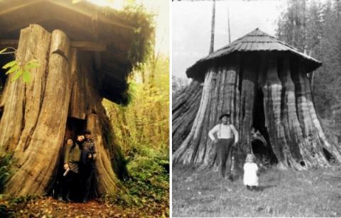 Дом-пенек: странные дома, в которых жили американские поселенцы XIX века