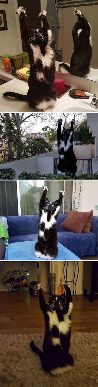Коты - это существа с другой…