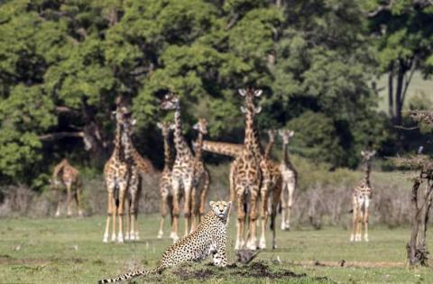 В Кении засняли встречу любо…