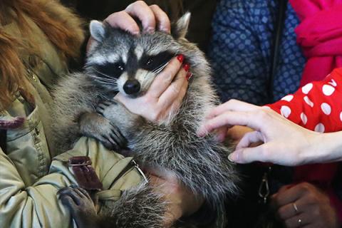 Что ждет зверей, попавших в контактный зоопарк
