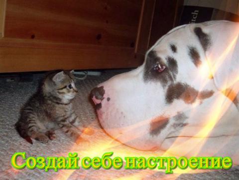Позитив от Михалыча - создай…