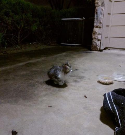 Открыв дверь, они обнаружили насквозь промокшего маленького котенка, звавшего на помощь!
