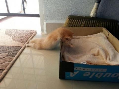 10 изобретательных котов, ко…