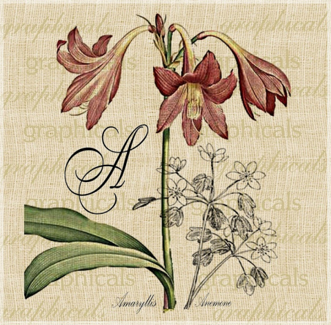 Флора и фауна.  Королевская коллекция винтажных картинок. Автор: Graphicals.