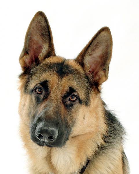 Альтон. Удивительная история о собаке, поразившей всех своим поступком
