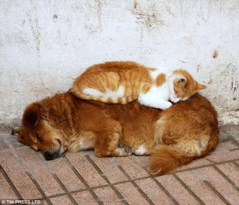 Наглость зашкаливает: коты, …