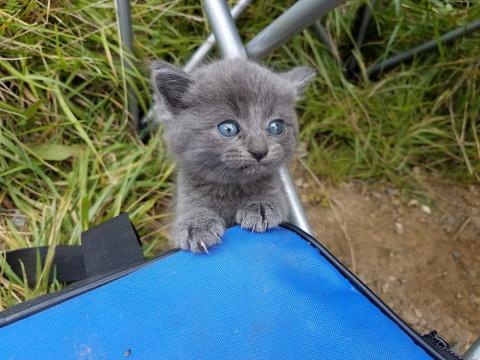 Бездомный котёнок подбежал к…